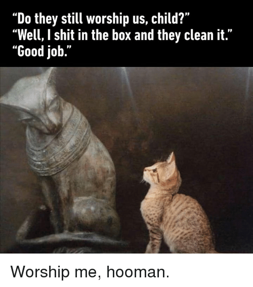 """Dank, Shit, and Good: """"Do they still worship us, child?""""  """"Well, I shit in the box and they clean it.""""  """"Good job."""" Worship me, hooman."""