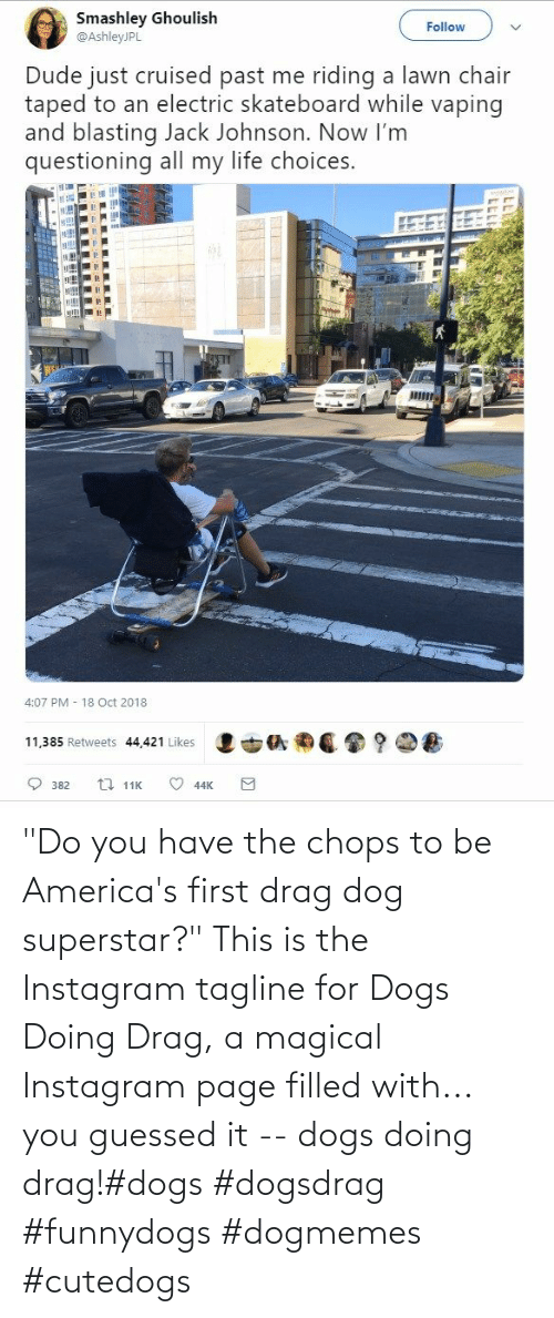 """page: """"Do you have the chops to be America's first drag dog superstar?"""" This is the Instagram tagline for Dogs Doing Drag, a magical Instagram page filled with... you guessed it -- dogs doing drag!#dogs #dogsdrag #funnydogs #dogmemes #cutedogs"""
