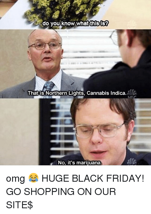 Black Friday, Friday, and Memes: do you know whatthls  That is Northern Lights, Cannabis Indica.  NP  No, it's marijuana omg 😂 HUGE BLACK FRIDAY! GO SHOPPING ON OUR SITE$