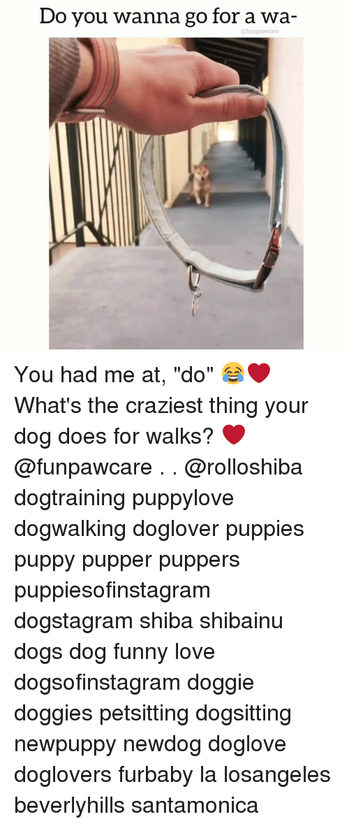 "Dogs, Funny, and Love: Do you wanna go for a wa-  efunpawcare You had me at, ""do"" 😂❤️ What's the craziest thing your dog does for walks? ❤️@funpawcare . . @rolloshiba dogtraining puppylove dogwalking doglover puppies puppy pupper puppers puppiesofinstagram dogstagram shiba shibainu dogs dog funny love dogsofinstagram doggie doggies petsitting dogsitting newpuppy newdog doglove doglovers furbaby la losangeles beverlyhills santamonica"