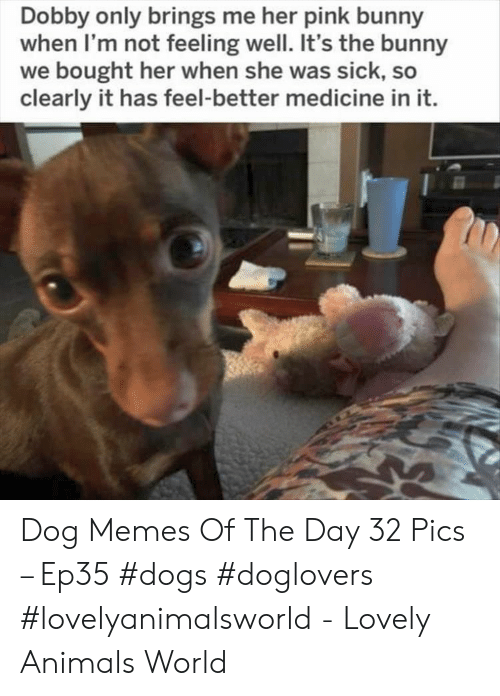 Animals, Dogs, and Memes: Dobby only brings me her pink bunny  when I'm not feeling well. It's the bunny  we bought her when she was sick, so  clearly it has feel-better medicine in it. Dog Memes Of The Day 32 Pics – Ep35 #dogs #doglovers #lovelyanimalsworld - Lovely Animals World