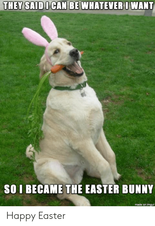 Easter, Happy, and Imgur: DOCAN BE WHATEVE  RI WANT  SO I BECAME THE EASTER BUNNY  made on imgur Happy Easter