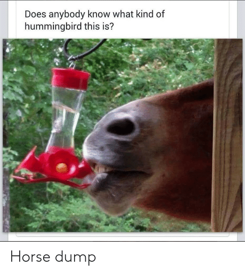 Horse, Hummingbird, and What: Does anybody know what kind of  hummingbird this is? Horse dump
