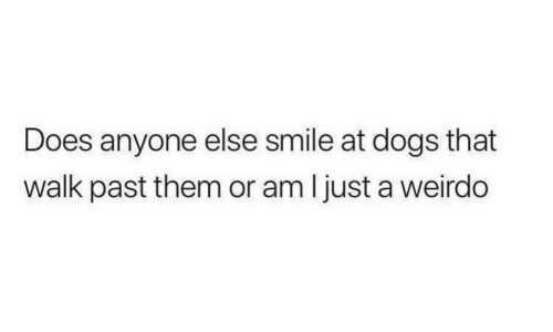 Dogs, Smile, and Them: Does anyone else smile at dogs that  walk past them or am ljust a weirdo