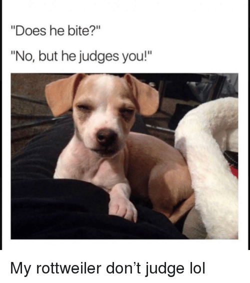 """Funny, Lol, and Rottweiler: """"Does he bite?""""  """"No, but he judges you!"""" My rottweiler don't judge lol"""