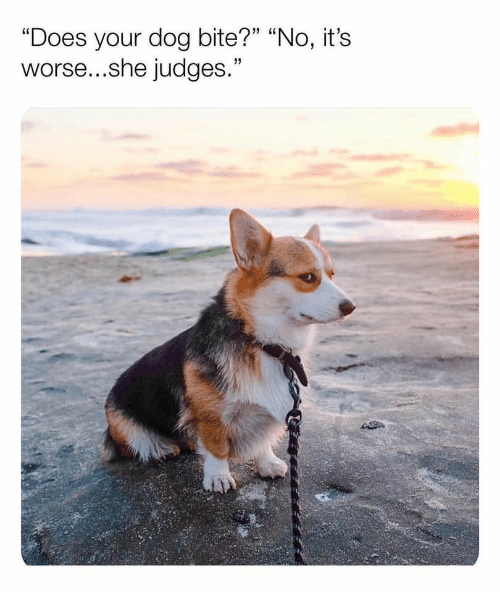 "Dog Bite: ""Does your dog bite?"" ""No, it's  worse...she judges."""