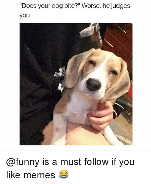 "Dog Bite: ""Does your dog bite?"" Worse, he judges  you @funny is a must follow if you like memes 😂"