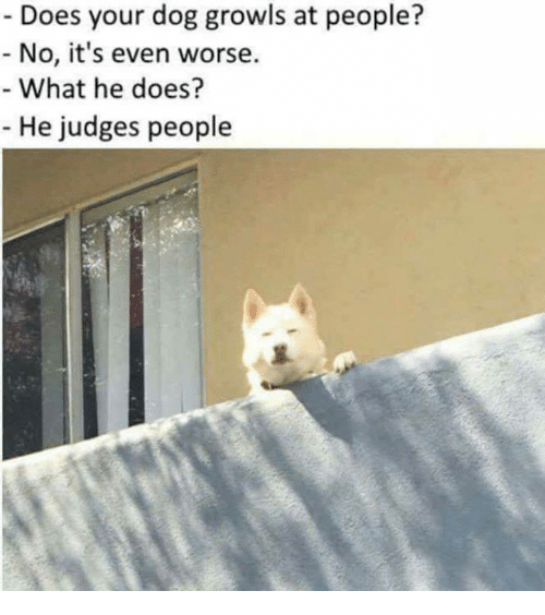 Dog, What, and Dogging: Does your dog growls at people?  No, i's even worse.  What he does?  He judges people