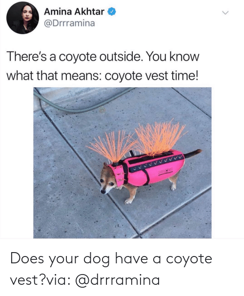 Coyote: Does your dog have a coyote vest?via: @drrramina