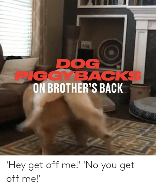 Dank, Back, and 🤖: DOG  9GGYBACKS  ON BROTHER'S BACK 'Hey get off me!'  'No you get off me!'