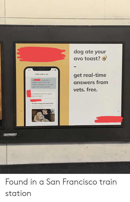 Advice, Chat, and Free: dog ate your  avo toast?  9:41  Chat with a vet  get real-time  H  I just got a  answers from  puppy,ond l have SO  many questions. Can you  give me some advice?  vets. free.  Hi Natalie! Here's a good  place to start  The New Puppy Survival Guide  Everything you need to know about  roising your frst pup  OUTFRONT Found in a San Francisco train station
