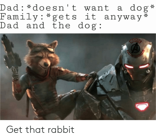 Dad, Family, and Marvel: dog  Dad: *doesn't want  Family*gets it anyway*  Dad and the dog  a  :  MARVEL  SHIEL Get that rabbit
