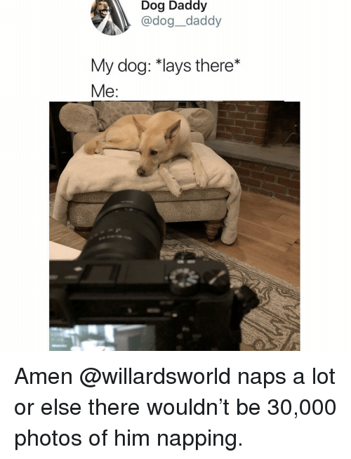 Lay's, Memes, and 🤖: Dog Daddy  @dog_daddy  My dog: *lays there*  Me: Amen @willardsworld naps a lot or else there wouldn't be 30,000 photos of him napping.