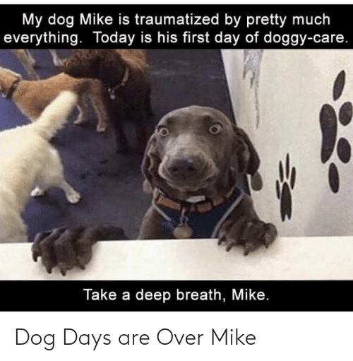 Dog: Dog Days are Over Mike