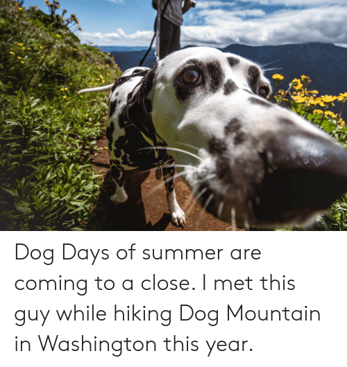 Summer, Dog, and Washington: Dog Days of summer are coming to a close. I met this guy while hiking Dog Mountain in Washington this year.