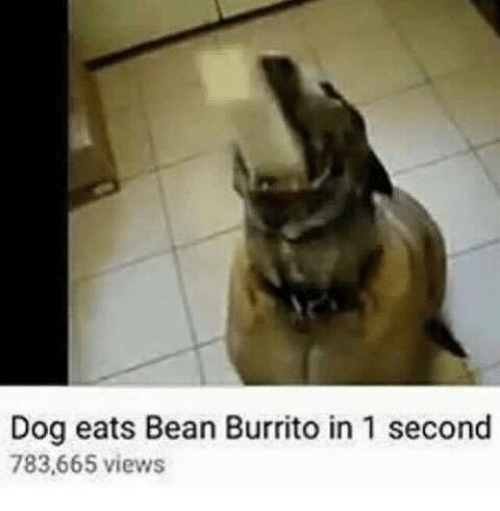 Dog, Burrito, and Bean: Dog eats Bean Burrito in 1 second  783,665 views