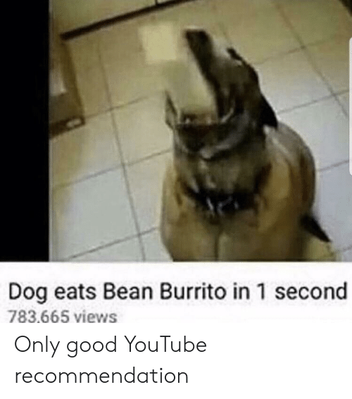 youtube.com, Good, and Dog: Dog eats Bean Burrito in 1 second  783.665 views Only good YouTube recommendation