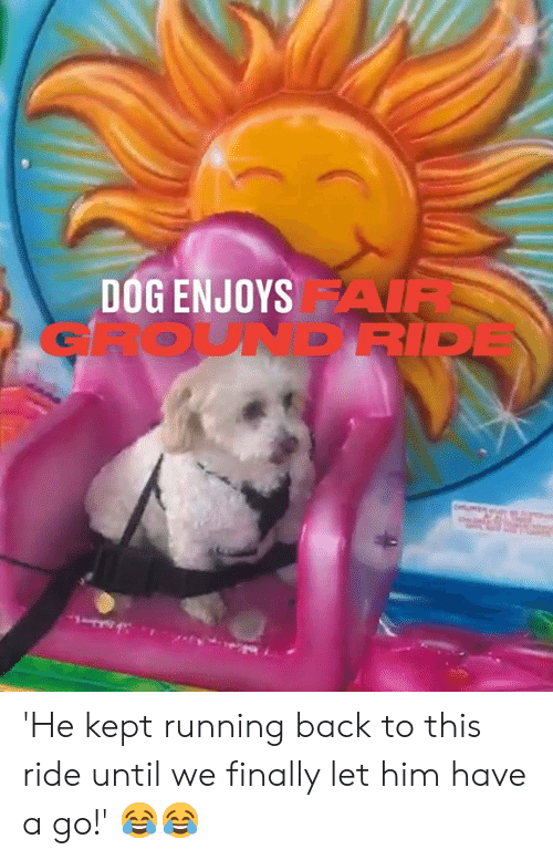 Dank, Running, and Back: DOG ENJOYSAIR  GROUNDRIDE 'He kept running back to this ride until we finally let him have a go!' 😂😂