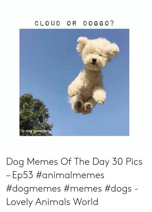 Animals, Dogs, and Memes: DOG G O?  CLOUD  OR  dog.gomemes Dog Memes Of The Day 30 Pics – Ep53 #animalmemes #dogmemes #memes #dogs - Lovely Animals World