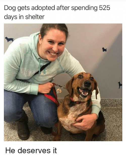 Dog, Shelter, and  Days: Dog gets adopted after spending 525  days in shelter He deserves it