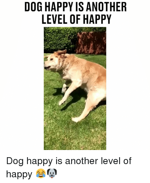Memes, Happy, and 🤖: DOG HAPPY IS ANOTHER  LEVEL OF HAPPY Dog happy is another level of happy 😂🐶