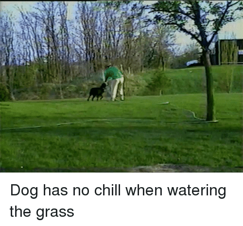Chill, No Chill, and Dog: Dog has no chill when watering the grass