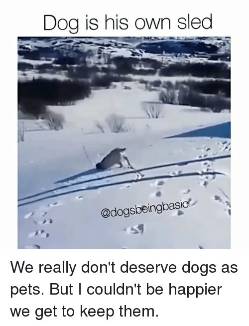 sleds: Dog is his own sled  @dogsbeingbasic We really don't deserve dogs as pets. But I couldn't be happier we get to keep them.