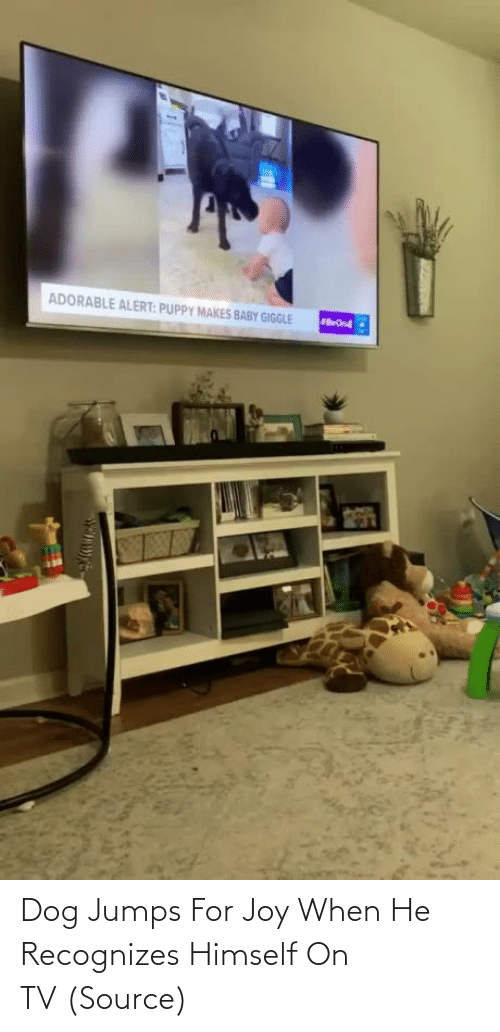 When He: Dog Jumps For Joy When He Recognizes Himself On TV (Source)