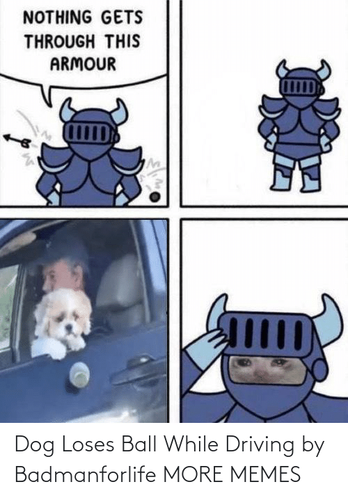Driving: Dog Loses Ball While Driving by Badmanforlife MORE MEMES