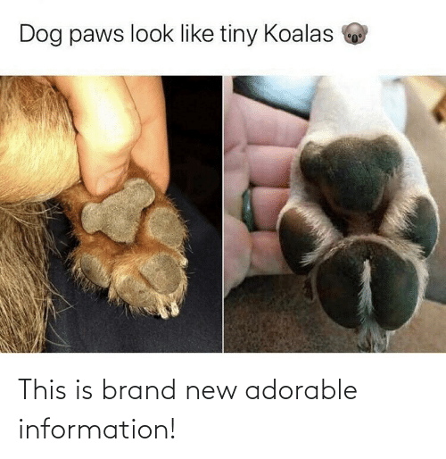 brand new: Dog paws look like tiny Koalas This is brand new adorable information!