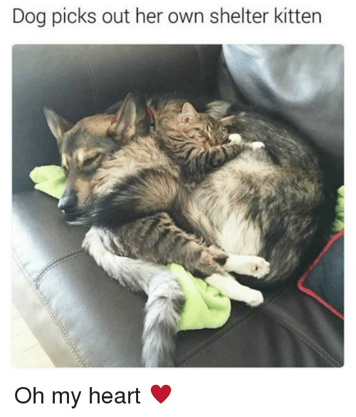 Heart, Her, and Dog: Dog picks out her own shelter kitten Oh my heart ♥️