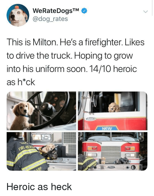 Soon..., Drive, and Firefighter: @dog rates  This is Milton. He's a firefighter. Likes  to drive the truck. Hoping to grow  into his uniform soon. 14/10 heroic  as h*ck  NEW  RE-RE Heroic as heck