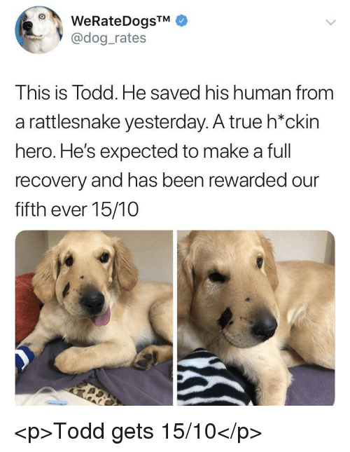 True, Been, and Hero: @dog_rates  This is Todd. He saved his human from  a rattlesnake yesterday. A true h*ckin  hero. He's expected to make a full  recovery and has been rewarded our  fifth ever 15/10 <p>Todd gets 15/10</p>