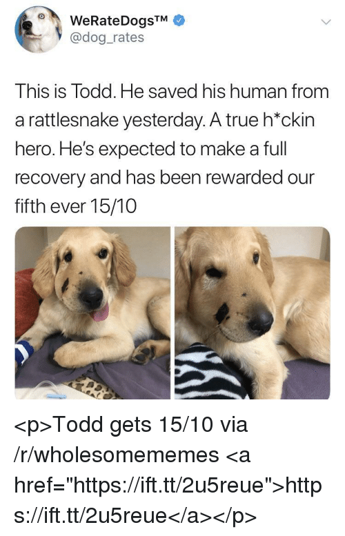 "True, Been, and Hero: @dog_rates  This is Todd. He saved his human from  a rattlesnake yesterday. A true h*ckin  hero. He's expected to make a full  recovery and has been rewarded our  fifth ever 15/10 <p>Todd gets 15/10 via /r/wholesomememes <a href=""https://ift.tt/2u5reue"">https://ift.tt/2u5reue</a></p>"