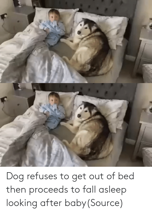 Fall: Dog refuses to get out of bed then proceeds to fall asleep looking after baby(Source)
