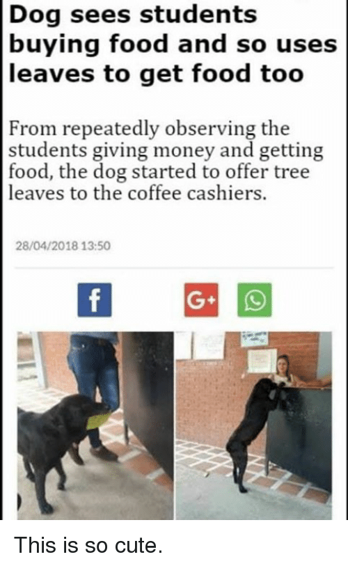 Cute, Food, and Memes: Dog sees students  buying food and so uses  leaves to get food too  From repeatedly observing the  students giving money and getting  food, the dog started to offer tree  leaves to the coffee cashiers.  28/04/2018 13:50 This is so cute.