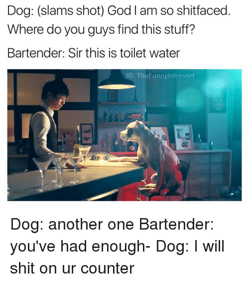Another One, Another One, and Introvert: Dog: (slams shot) God l am so shitfaced  Where do you guys find this stuff?  Bartender: Sir this is toilet water  IG  TheFunny Introvert Dog: another one Bartender: you've had enough- Dog: I will shit on ur counter