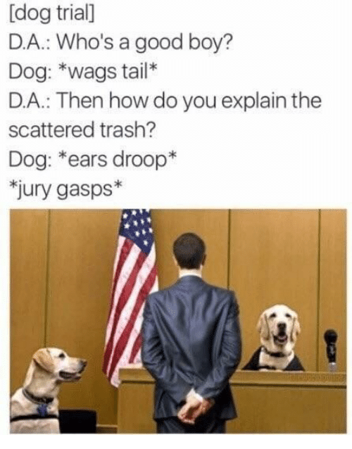 Trash, Good, and Boy: [dog trial]  D.A.: Who's a good boy?  Dog: *wags tail*  D.A.: Then how do you explain the  scattered trash?  Dog: *ears droop*  jury gasps*