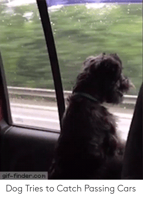 Tries: Dog Tries to Catch Passing Cars