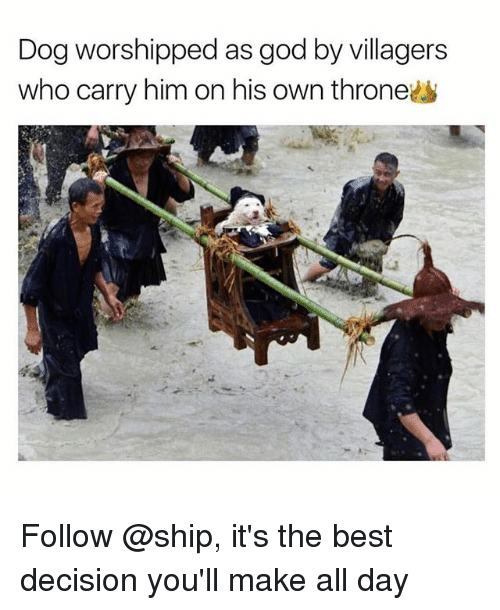 Funny, God, and Best: Dog worshipped as god by villagers  who carry him on his own throne Follow @ship, it's the best decision you'll make all day