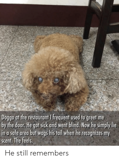 Restaurant, Sick, and Doggo: Doggo at the restaurant I frequent used to greet me  by the door. He got sick and went blind. Now he simply lie  in a safe area buf wags his tail whem he recognizes my  scent. The feels. He still remembers