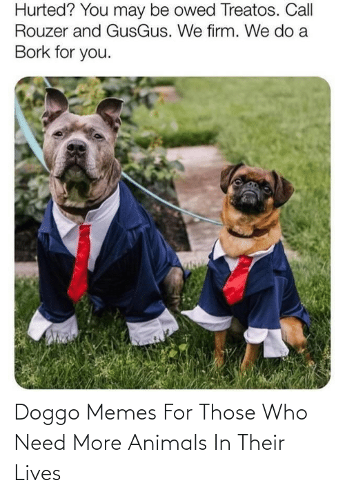 Animals: Doggo Memes For Those Who Need More Animals In Their Lives