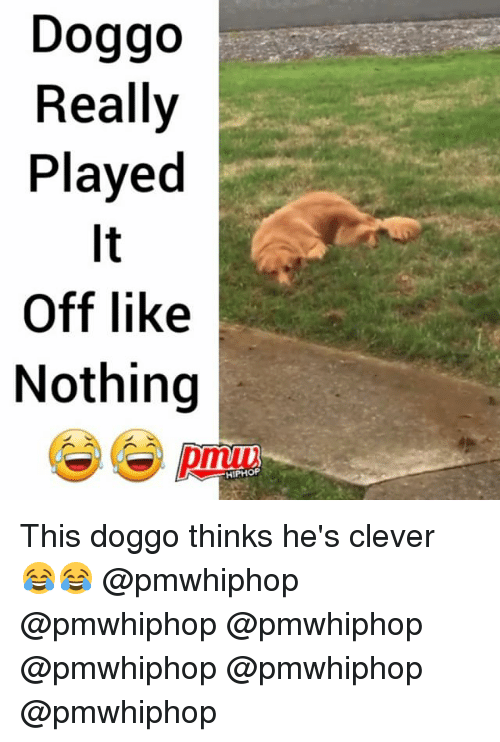 Cleverity: Doggo  Really  Played  It  Off like  Nothing  HIPHOP This doggo thinks he's clever 😂😂 @pmwhiphop @pmwhiphop @pmwhiphop @pmwhiphop @pmwhiphop @pmwhiphop