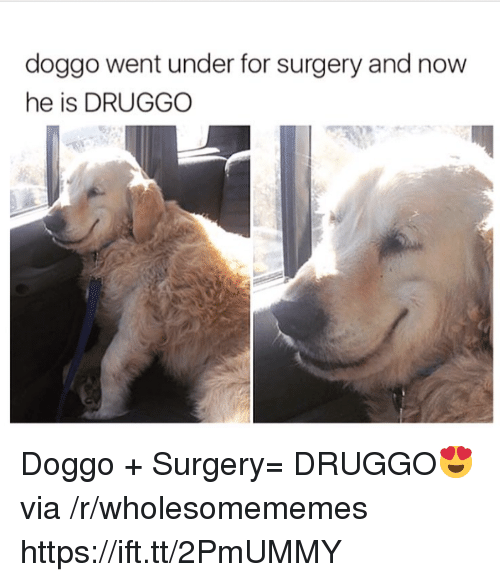 Doggo, Via, and Surgery: doggo went under for surgery and now  he is DRUGGO Doggo + Surgery= DRUGGO😍 via /r/wholesomememes https://ift.tt/2PmUMMY