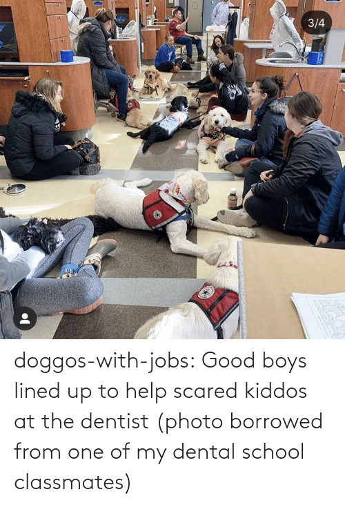 School: doggos-with-jobs:  Good boys lined up to help scared kiddos at the dentist (photo borrowed from one of my dental school classmates)