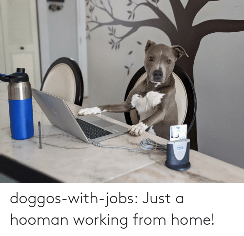 working: doggos-with-jobs:  Just a hooman working from home!