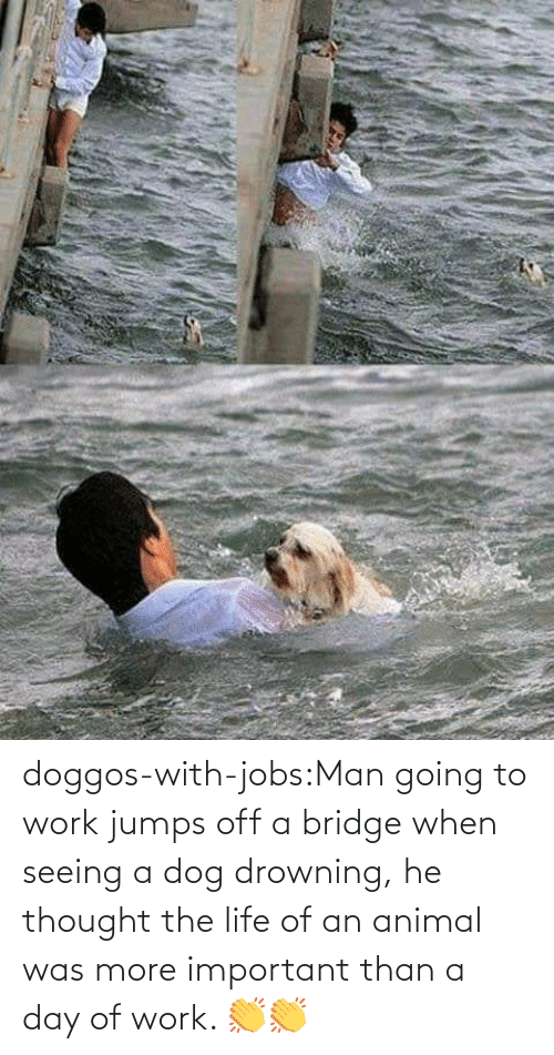A Day: doggos-with-jobs:Man going to work jumps off a bridge when seeing a dog drowning, he thought the life of an animal was more important than a day of work. 👏👏