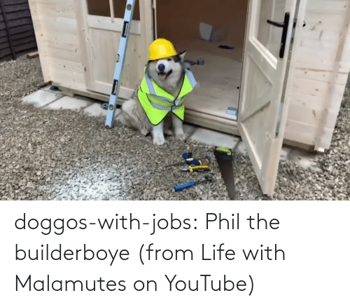 class: doggos-with-jobs:  Phil the builderboye (from Life with Malamutes on YouTube)