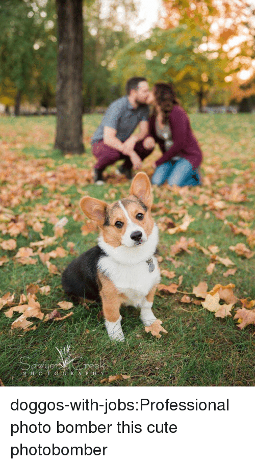 Cute, Tumblr, and Blog: doggos-with-jobs:Professional photo bomber this cute photobomber