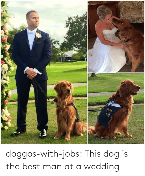 Dog: doggos-with-jobs:  This dog is the best man at a wedding